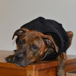 XL Black Fleece Doggie Hoodie